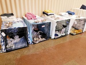 Liters of puppies ready for adoption